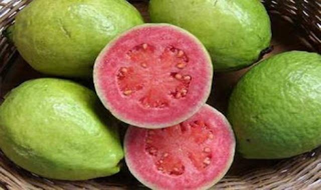Jambu Biji salah satu komoditi yang kini dikembangkan di Padang Pariaman,