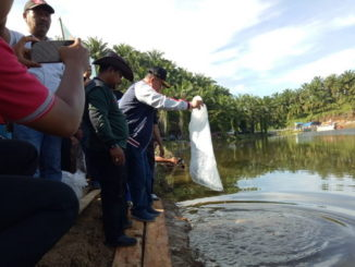 Wagub Nasrul Abit melepas bibit ikan di Embung Bancah Sopan, Pasaman Barat.