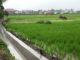 Proyek irigasi yang dikelola oleh KP3A Sinar Jaya Belui.