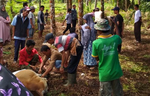Penyembelihan hewan qurban di Silayang.