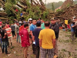 Pohon-pohon yang tumbang dan menutupi akses jalan.