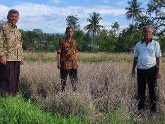 Kepala Dinas Pertanian Kota Padang Syahrial saat meninjau lokasi padi masyarakat