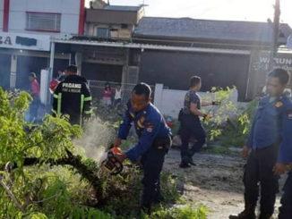 Pembersihan pohon tumbang di kota Padang.