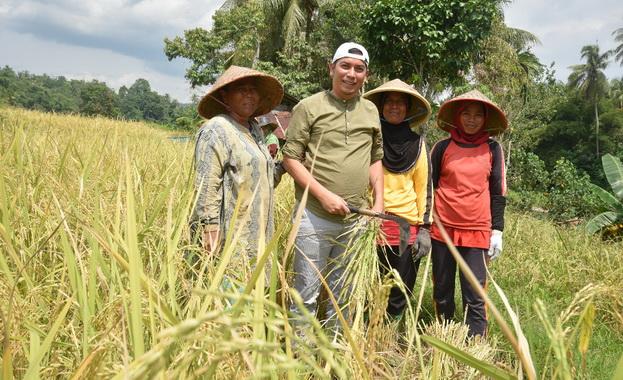 Deri Asta saat ikut panen padi masyarakat Kota Sawahlunto.