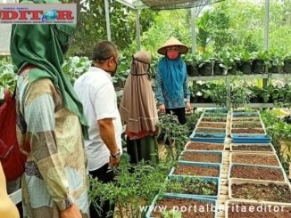 Lisda Hendrajoni saat mengunjungi salah tanaman pangan kelurga di Salido.