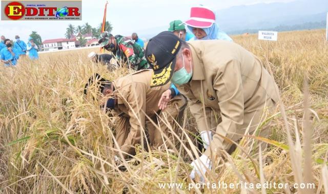 Wagub Nasrul Abit saat memotong padi pakai arit.