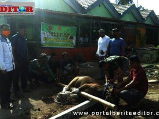 Penyembelihan hewan kurban yang dilakukan oleh institusi Kodim Selayar.
