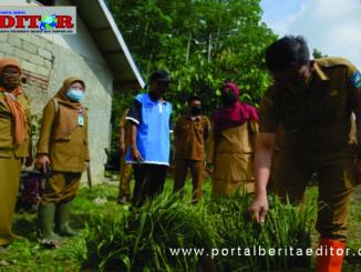 Wako Deri Asta saat ikut menanam jahe merah.