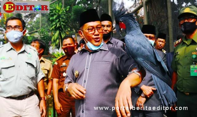 Wako Ramlan melepaskan burung ke dalam aviary pada peresmian Kinantan Bird Park.