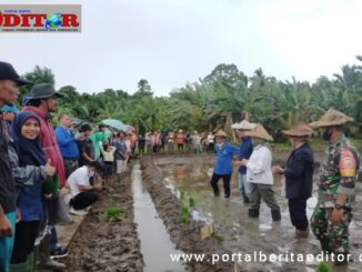 Penanaman serentak padi di Desa Nem-nemleleu Kecamatan Sipora Selatan kabupaten kepulauan Mentawai.