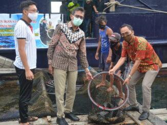 Gubernur Irwan Prayitno saat panen ikan kerapu.