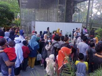 Kerumunan warga di gerbang kebun binatang saat digratiskan masuk.