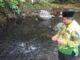 Bupati Suhatri Bur saat memberi makan ikan larangan.