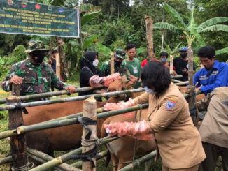 Inseminasi BI yang dilakukan Tim TMMD di Mentawai.