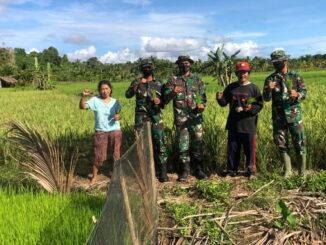 Persawahan masyarakat dusun Mapadegat Desa Tuapejat Kabupaten Kepulauan Mentawai.