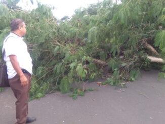 Angin kencang yang melanda Payakumbuh nenumbangkan sejumkah pohon kayu ke jalan raya.