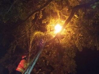 Petugas Damkar Payakumbuh tengah membasmi sarang tawon dengan cara membakarnya.