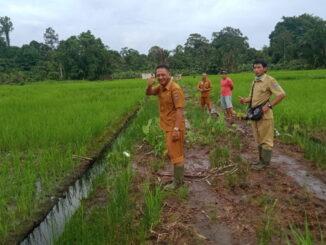 Jalan akses pertanian yang terus ditingkatkan di Desa Goiso'oinan wilayah dusun Kaliou kecamatan Sipora Utara.