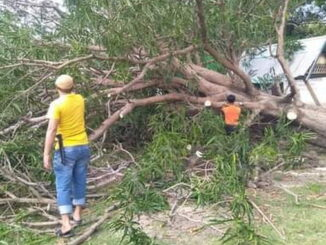 Pembersihan pohon tumbang di Bontosikuyu.