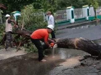 Pemotongan pohon yan tumbang.