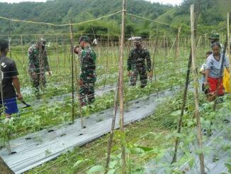 Anggota satgas TMMD-N bantu petani kacang panjang.
