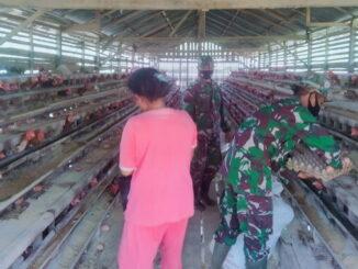 Kunjungan Satgas TMMD ke peternak ayam.