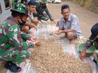 Anggota Satgas TMMD kke 111 Kodim 0306-50 Kota di Talang Maur tengah komsos dengan petani kacang tanah.