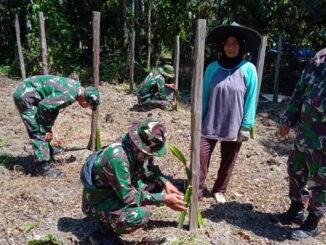 Satgas TMMD kunjunngi budidaya tanaman buah naga yang dilakukan Emi di Talang aur.