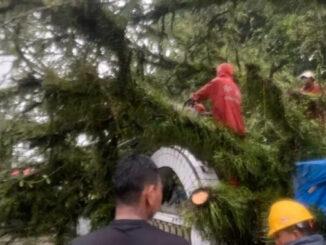 Pohon tumbang di Ulakan.