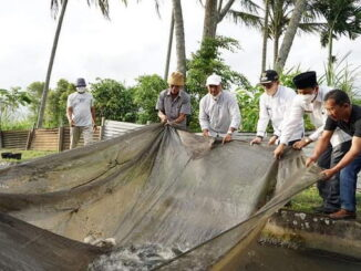 Bupati Eka Putra saat ikut panen ikan.