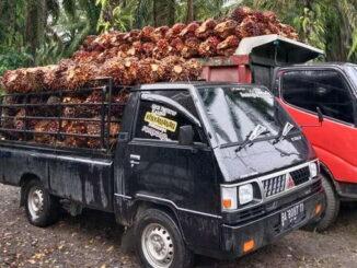 Mobil Sawit juragan Weri, akan berangkat menuju Pabrik PT, AMP.