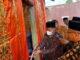 Wabup Padang Pariaman Rahmang menggunting pita menandai peresmian balairung adat Nagari Tandikek.